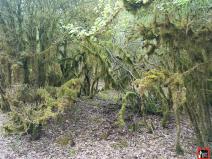 nafarroa-xtrem-2019-fotos-trail-running-navarra-por-mayayo (7)